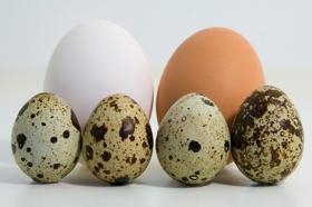 trichocephalosis tojás mérete