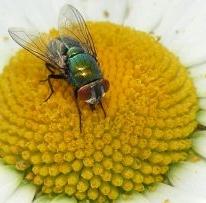 Próbáljuk távol tartani a polleneket
