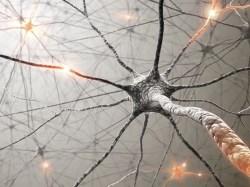 Speciális jelzések az agyunknak