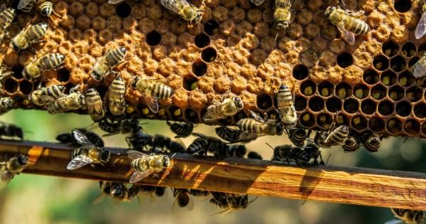 """A méhek """"gyantája"""""""