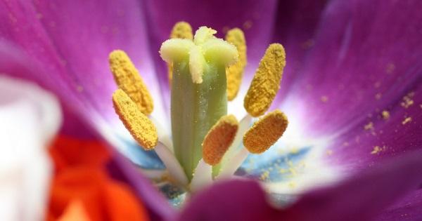 A pollen, a legnagyobb ellenség